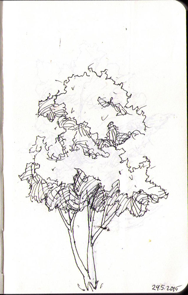 thomas-dalsgaard-clausen-2015-05-24d drawing of a tree in ballpoint pen