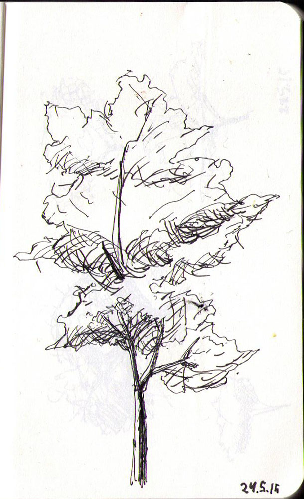 thomas-dalsgaard-clausen-2015-05-24e drawing of a tree in ballpoint pen
