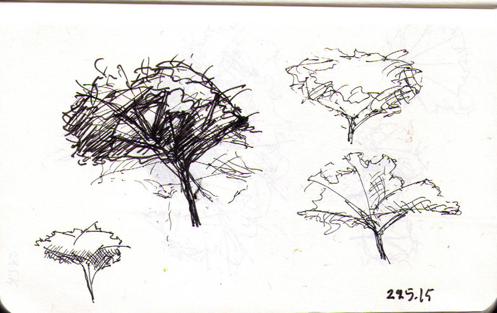 thomas-dalsgaard-clausen-2015-05-24f drawing of a tree in ballpoint pen
