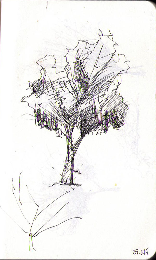 thomas-dalsgaard-clausen-2015-05-24h drawing of a tree in ballpoint pen