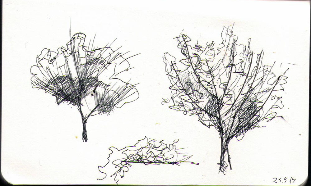 thomas-dalsgaard-clausen-2015-05-24i drawing of a tree in ballpoint pen