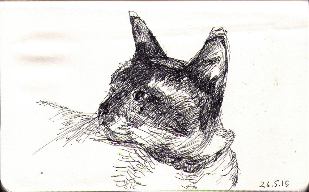 Drawing of a Siamese cat in ballpoint pen
