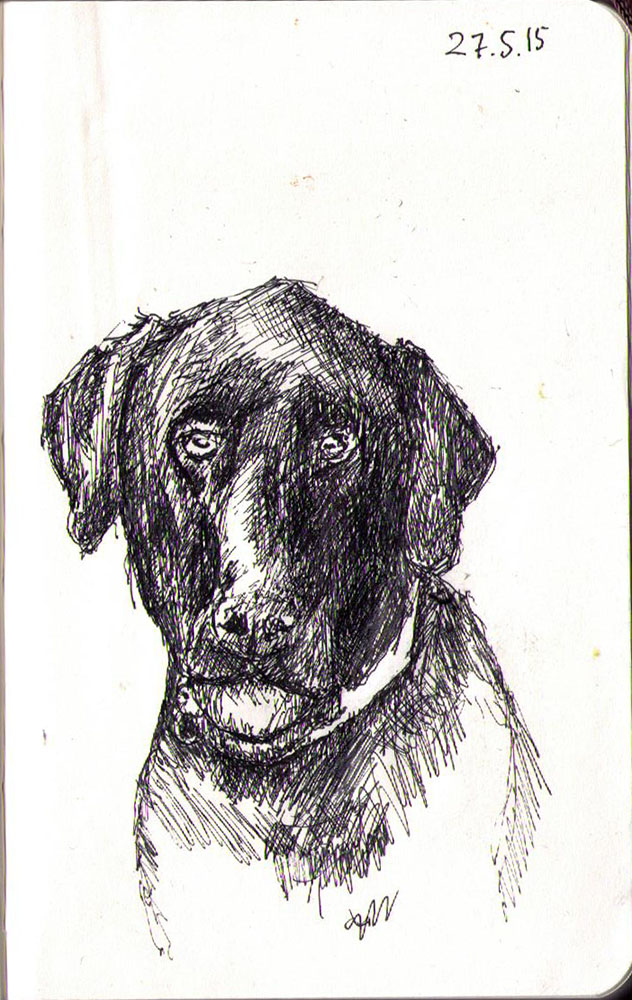 Drawing of a labrador dog called Jasper in ballpoint pen