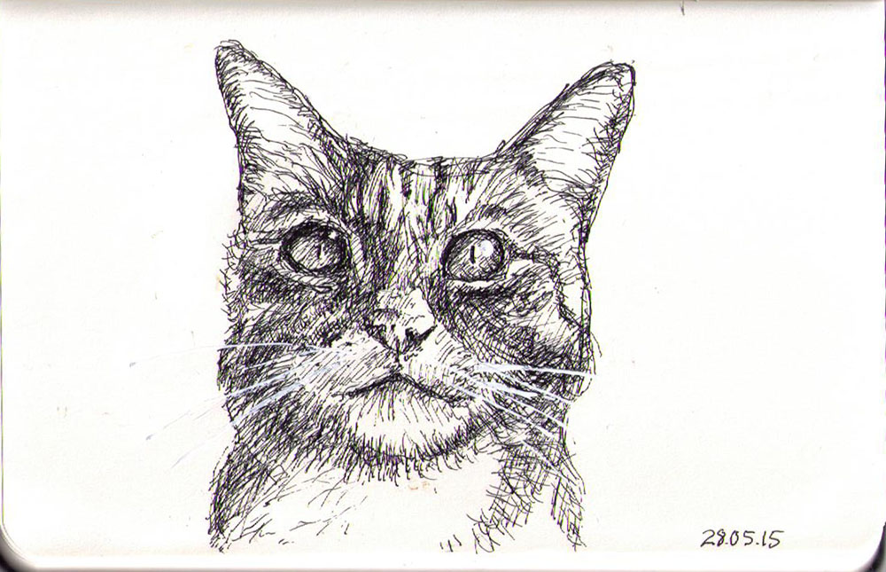 Drawing of a cat called Tinncat in ballpoint pen