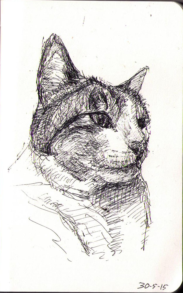 Drawing of a cat called Godzilla in ballpoint pen