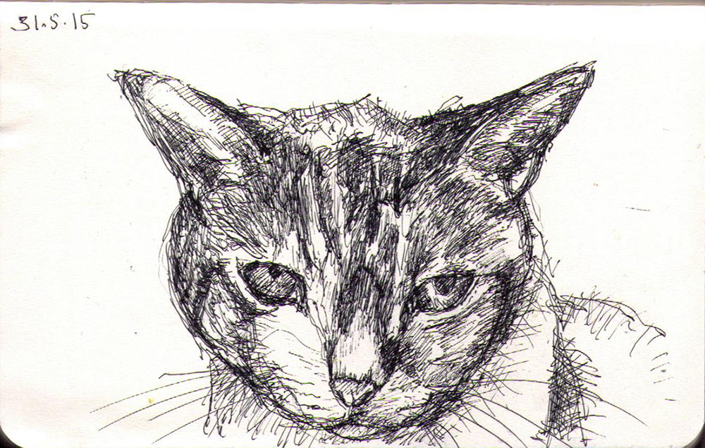 Drawing of a cat called Millie in ballpoint pen