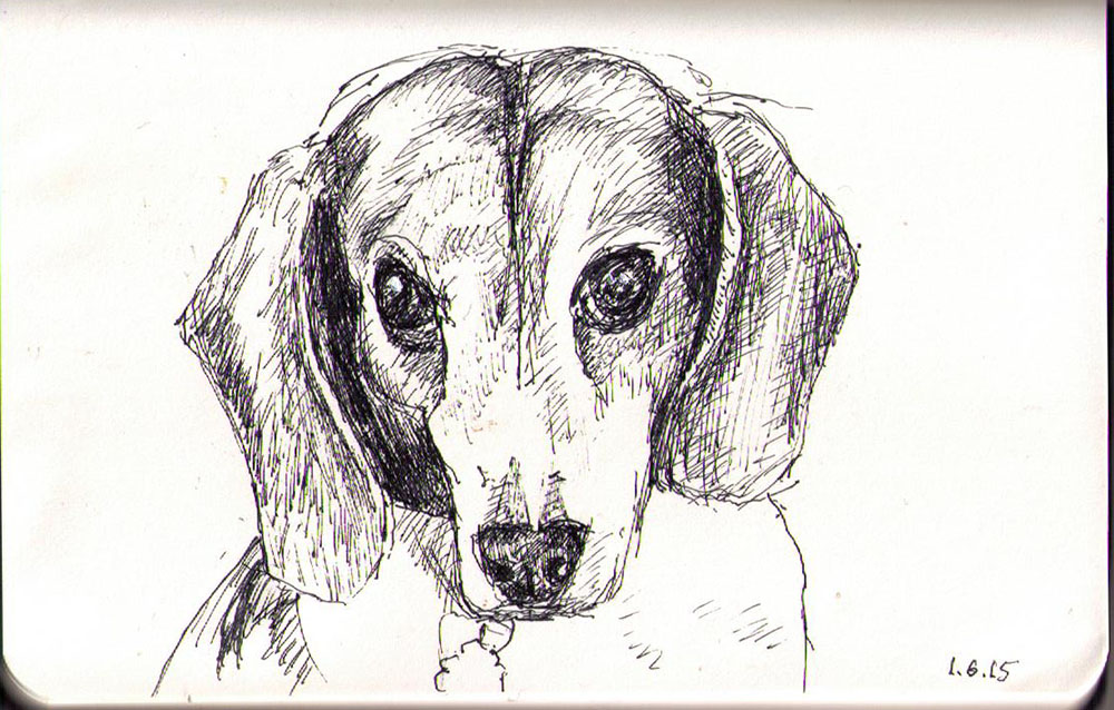 Drawing of a dog called Baxter in ballpoint pen