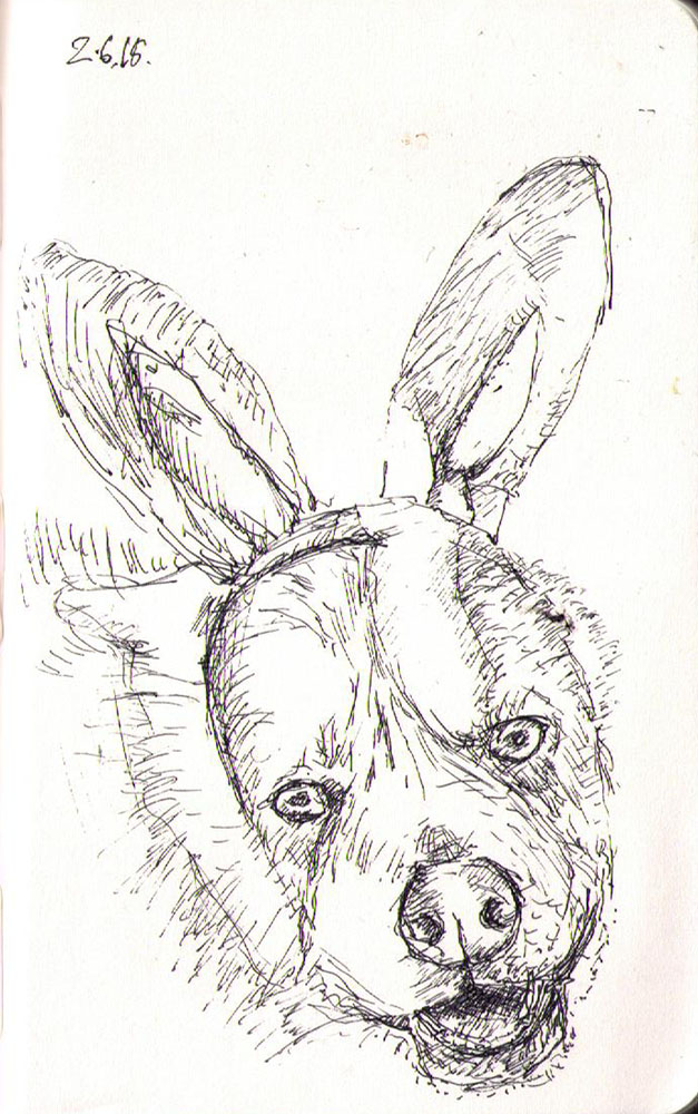 Dog wearing bunny ears. Drawing in ballpoint pen