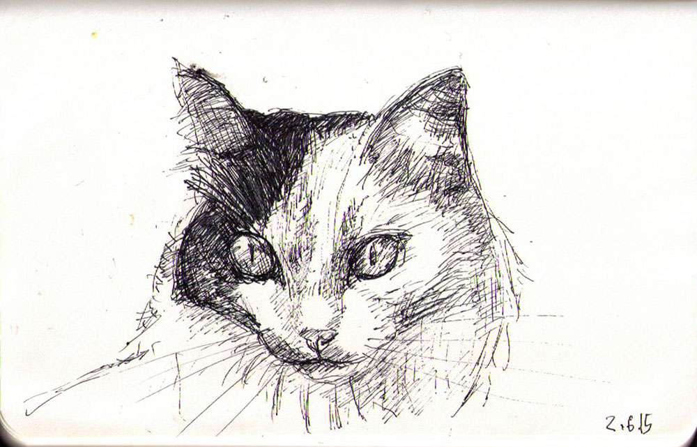 Drawing of a cat called Artemisia Tsarina of Cuteness in ballpoint pen!