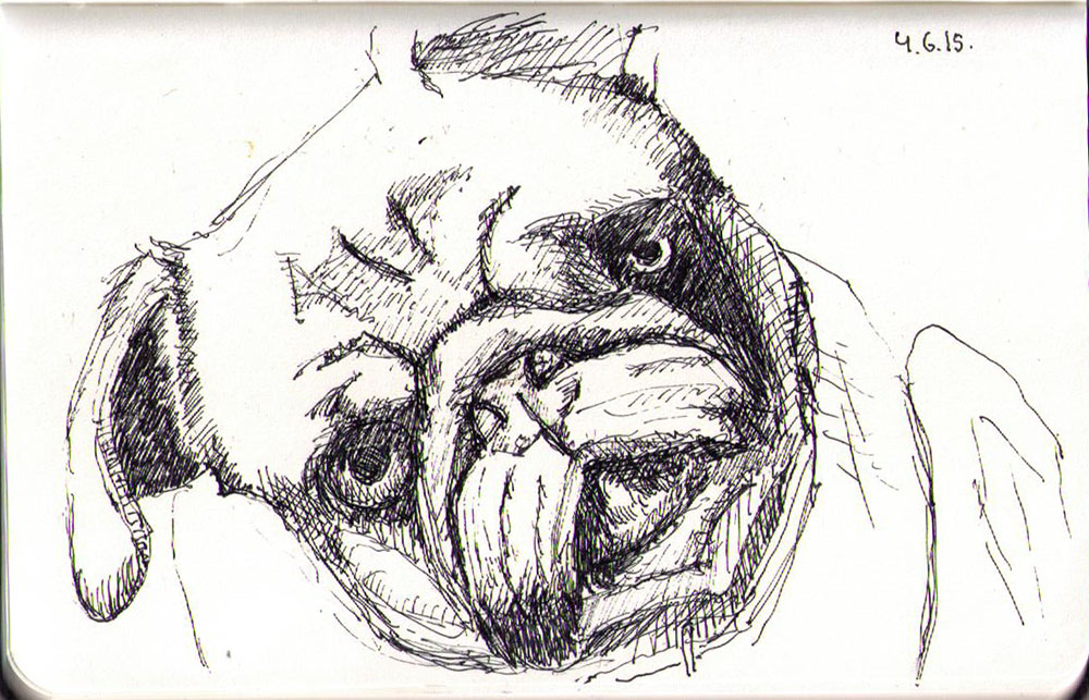 Ballpoint pen drawing of maggie the pug