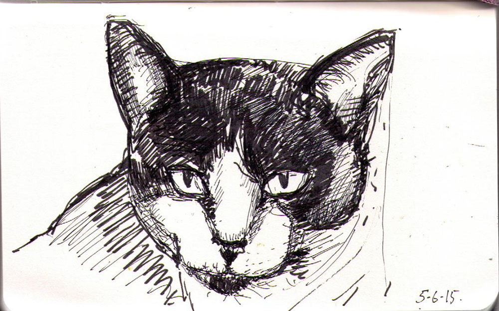 Drawing of a cat called Freya Frecklepaws in ballpoint pen