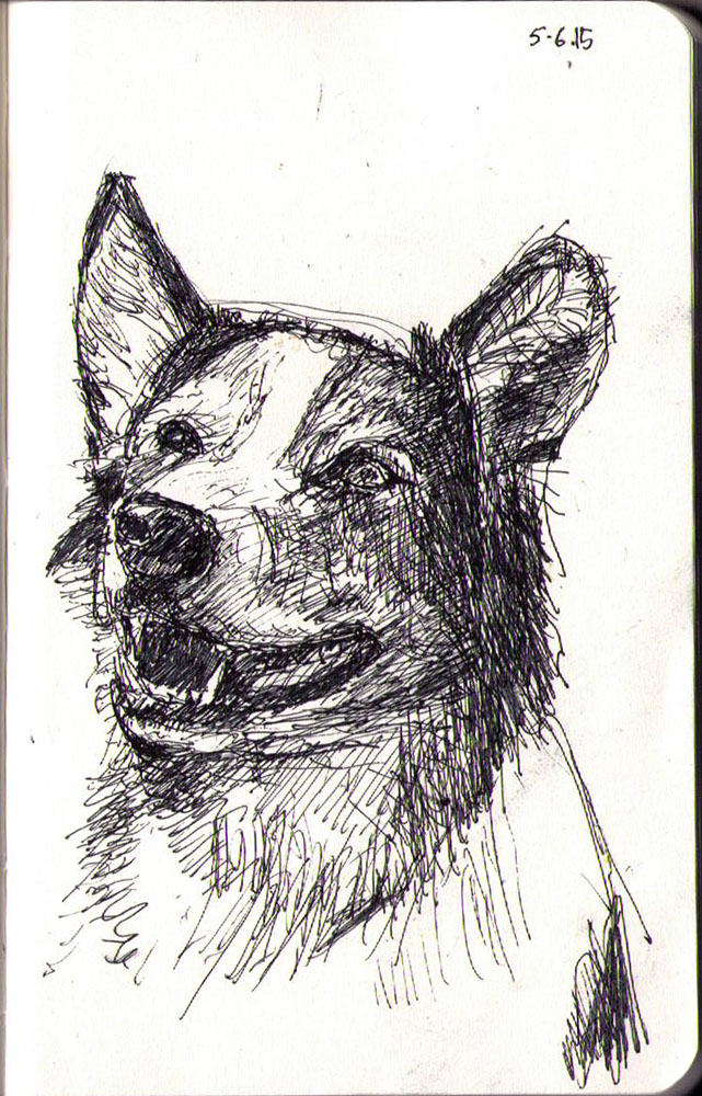 Drawing of a dog called Cisco in ballpoint pen