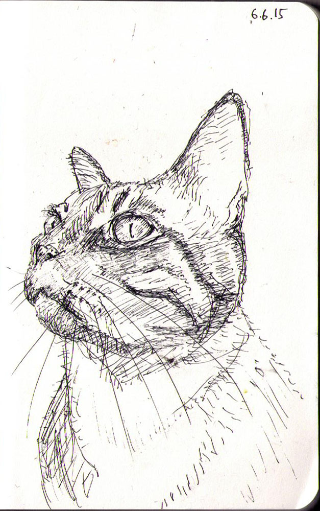 Drawing of a cat called Teddy in ballpoint pen