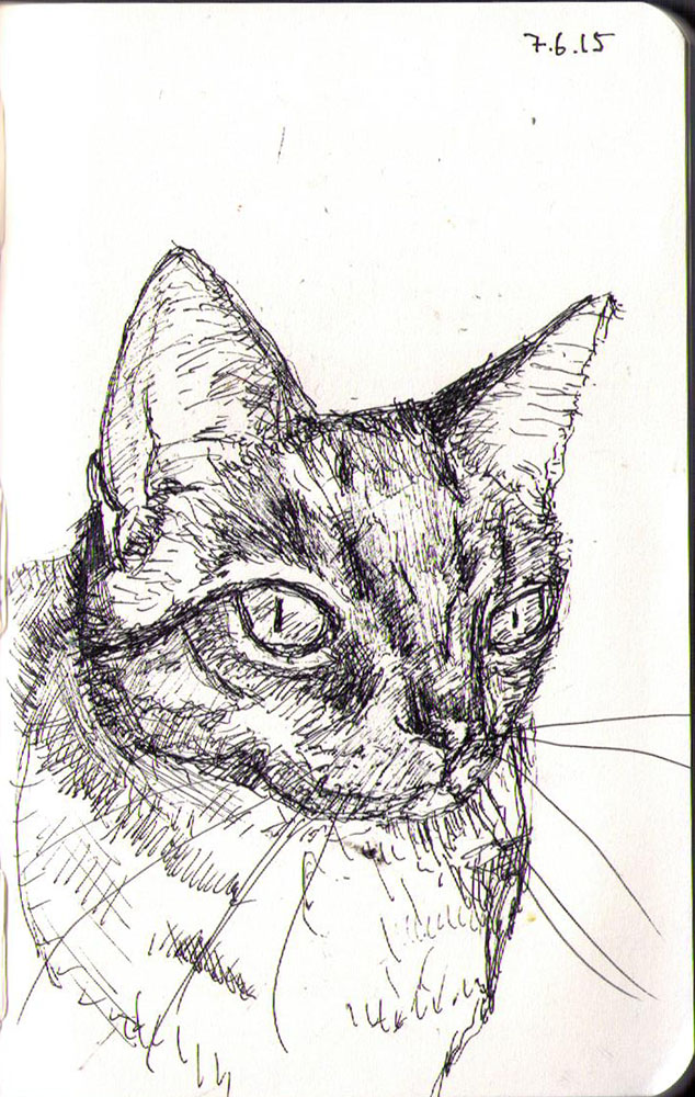Drawing of a cat called Freddie in ballpoint pen