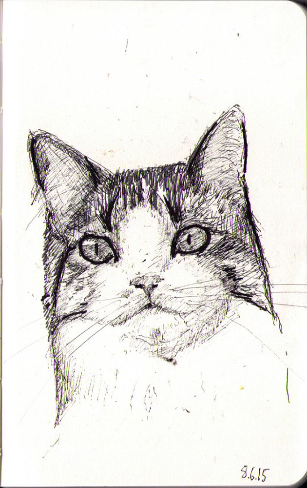 Drawing of a cat called Willow