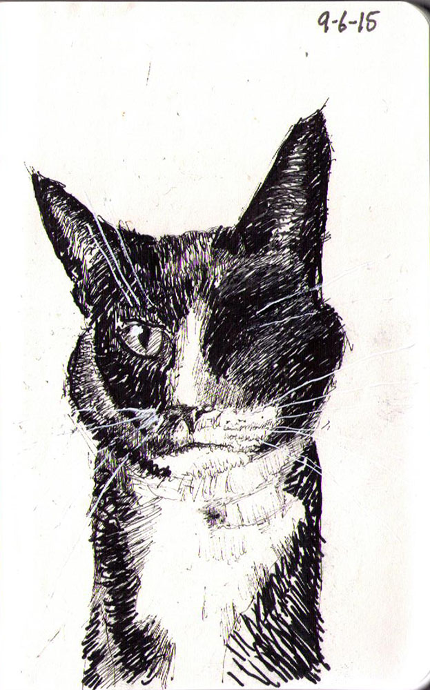 Drawing of a cat called Holly in ballpoint pen