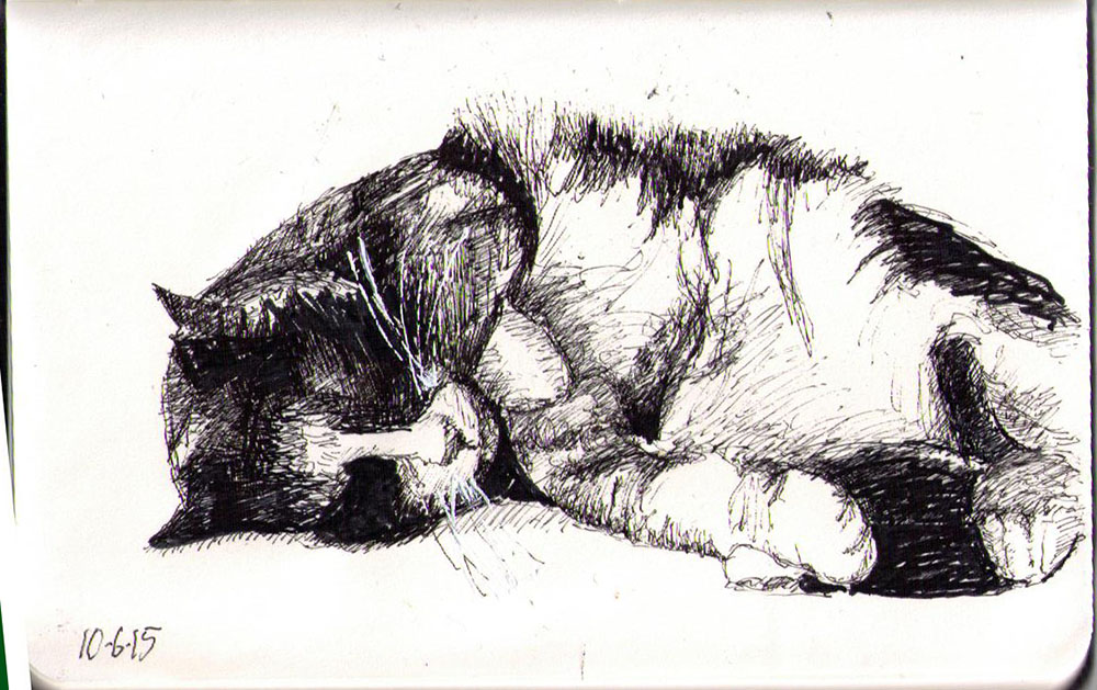 A drawing of a cat called Tia in ballpoint pen
