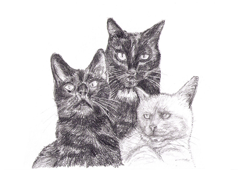 Commissioned drawing of three cats in pencil