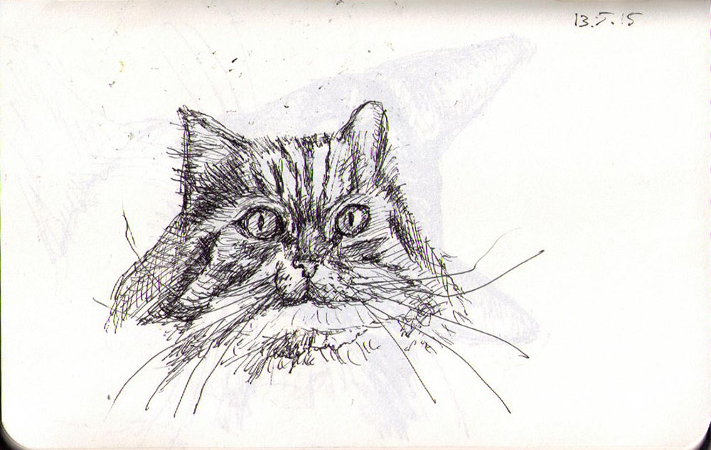 Drawing of a cat called Basil in ballpoint pen