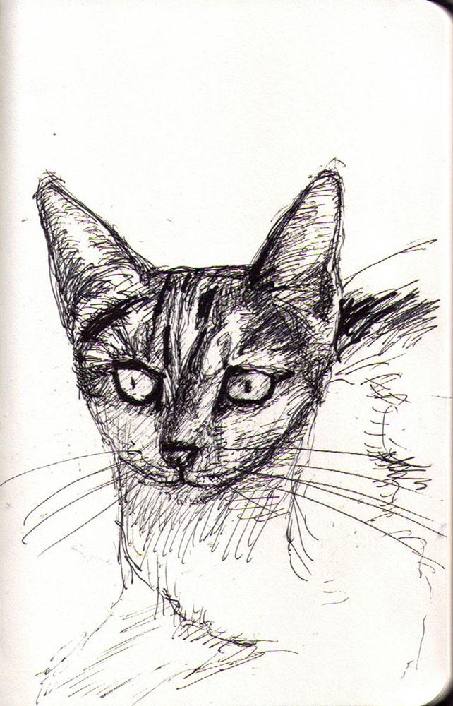 Drawing of a cat called Scarlett in ballpoint pen