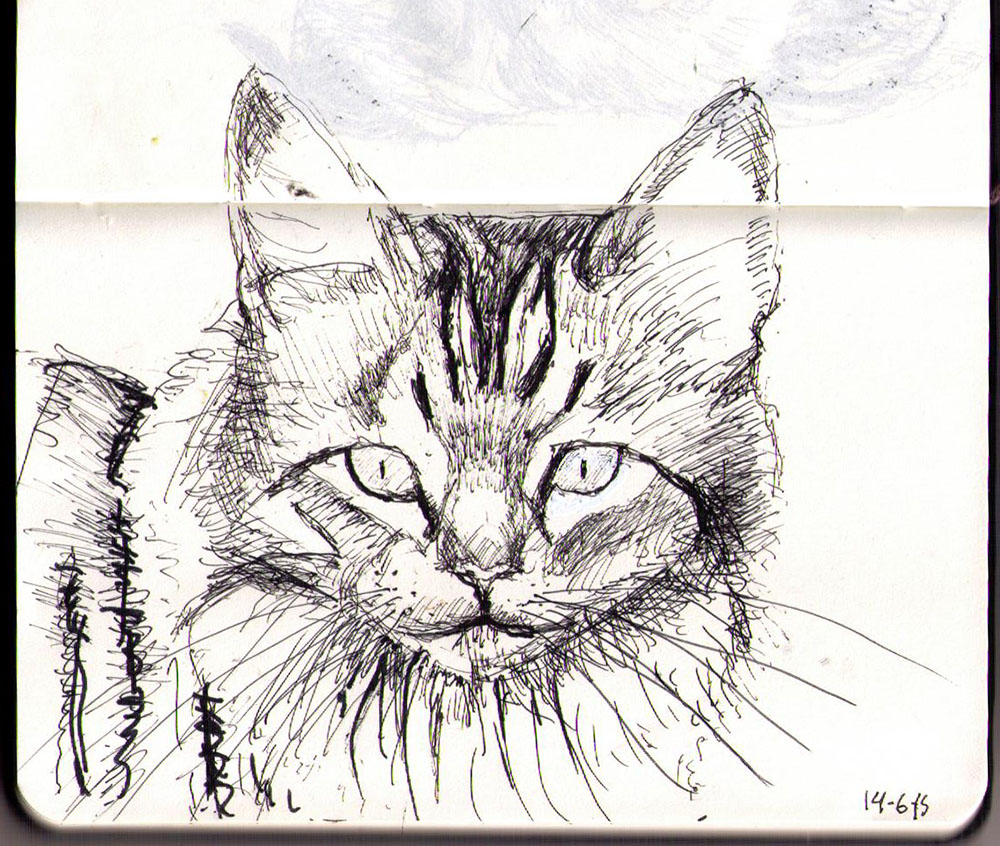 Drawing of a cat called Angel Doc in ballpoint pen