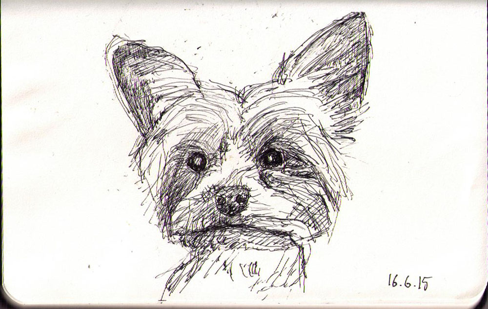 Drawing of a dog called Mylo in ballpoint pen