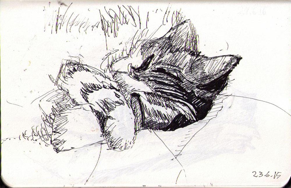 Drawing of a sleepy cat in ballpoint pen