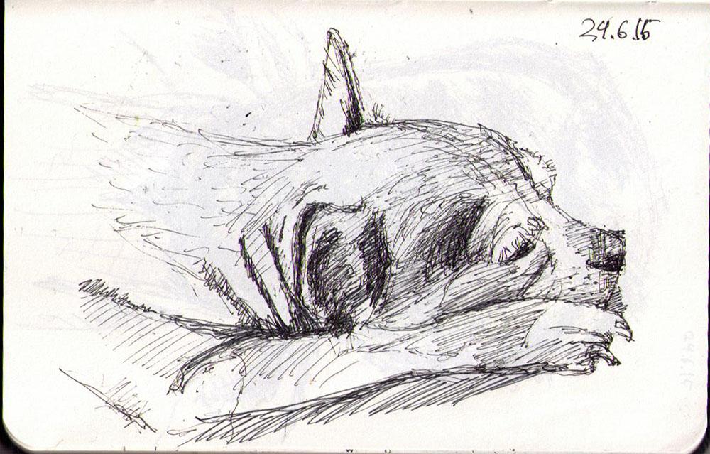 Drawing of a sleepy dog in ballpoiint pen