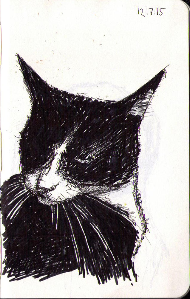 Drawing in ballpoint pen of a cat