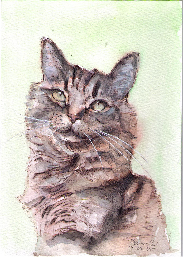 Drawing of Benji the cat in ballpoint pen and watercolor