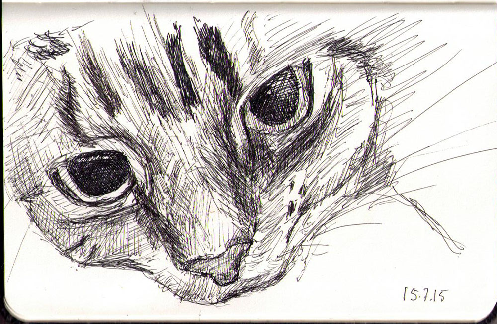 Close up drawing of a cat in ballpoint pen