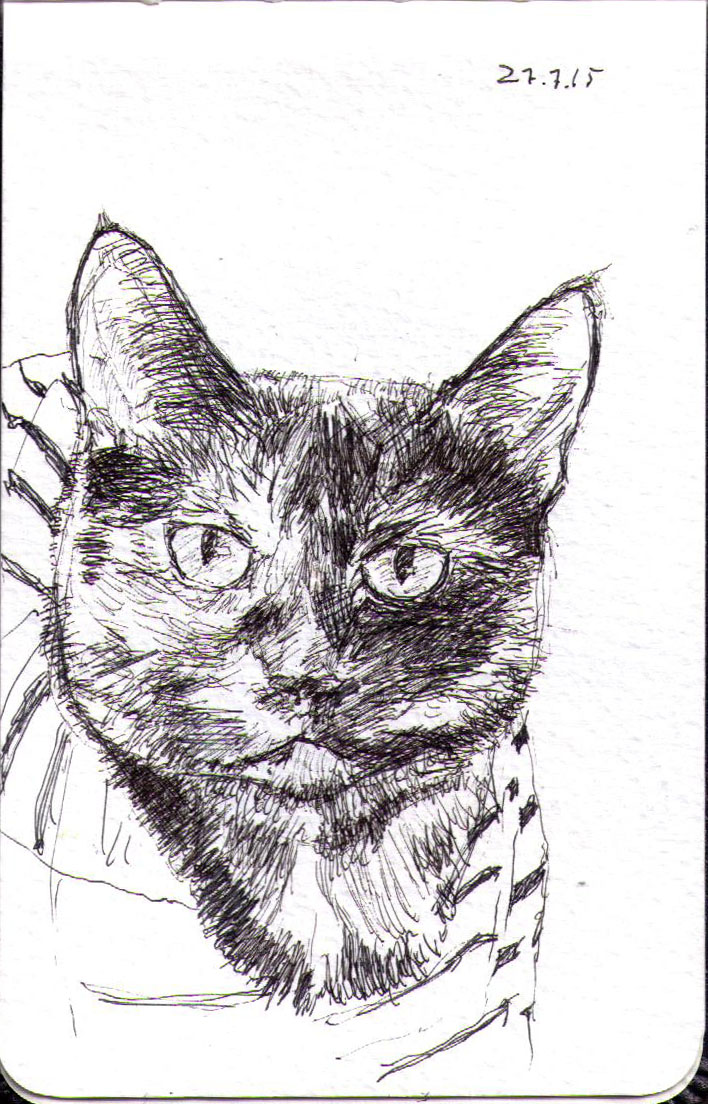 Drawing of a cat in ballpoint pen