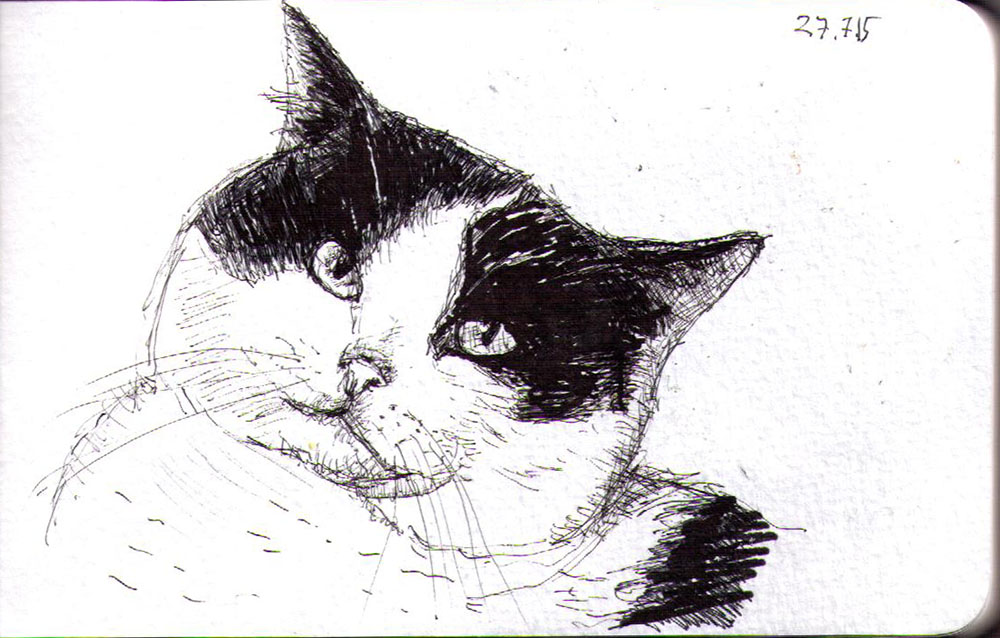 Drawing of a cat called Bobsy in ballpoint pen