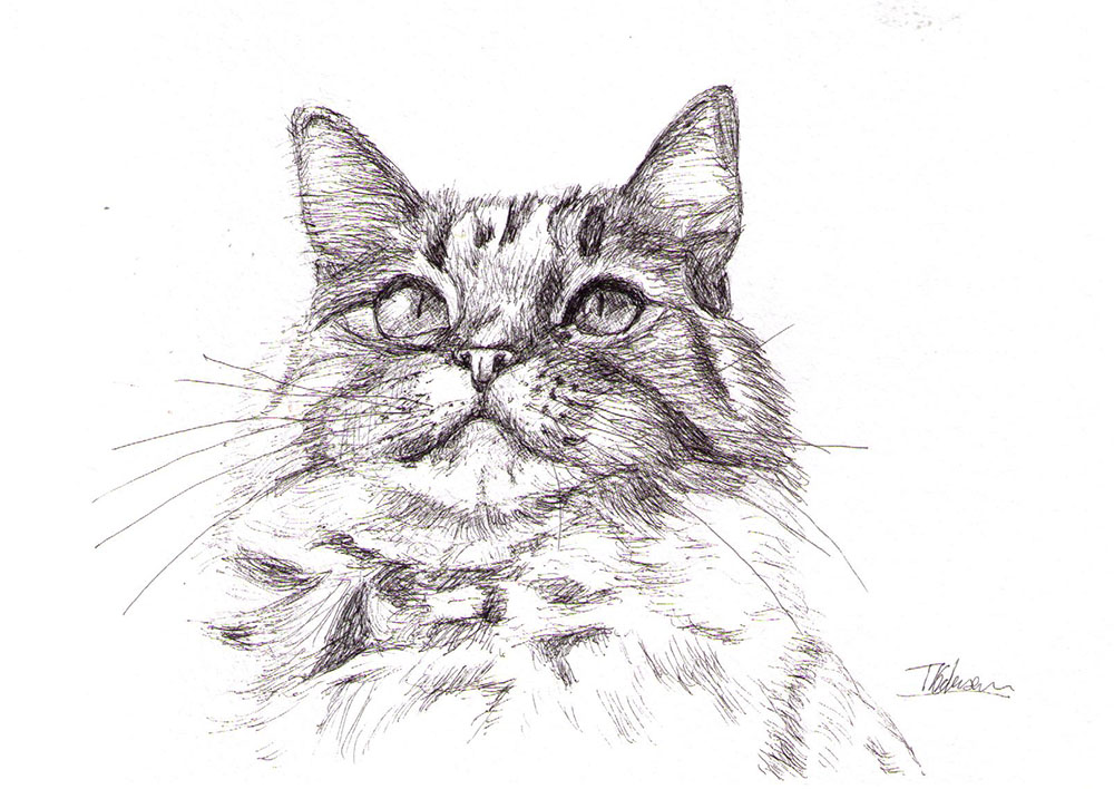 A commissioned portrait of a cat called Benji in ballpoint pen