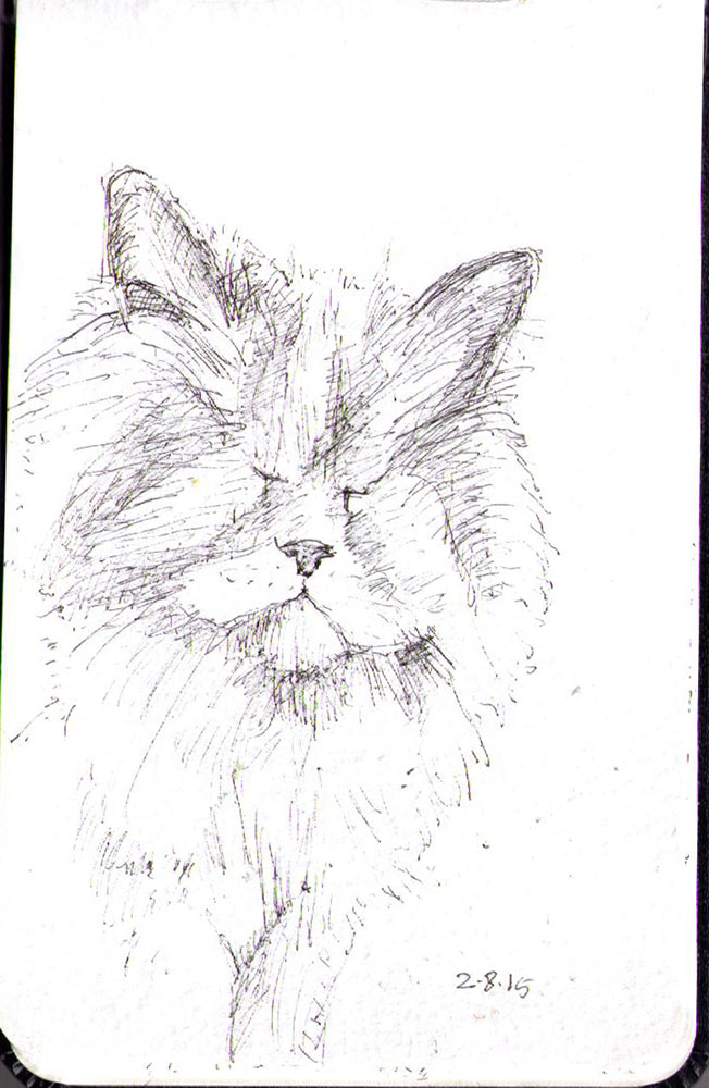 Drawing of a blind cat in ballpoint pen