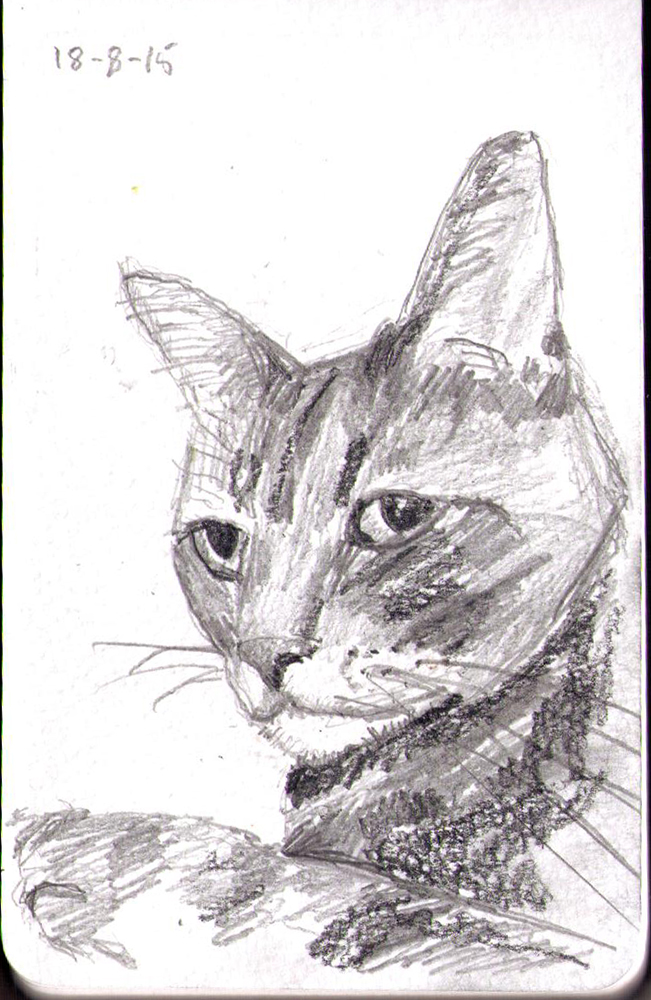 Drawing of a cat in pencil