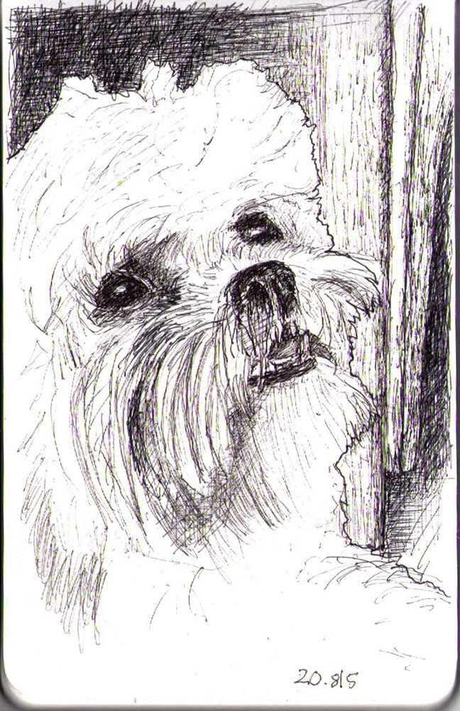 Drawing of a dog in ballpoint pen