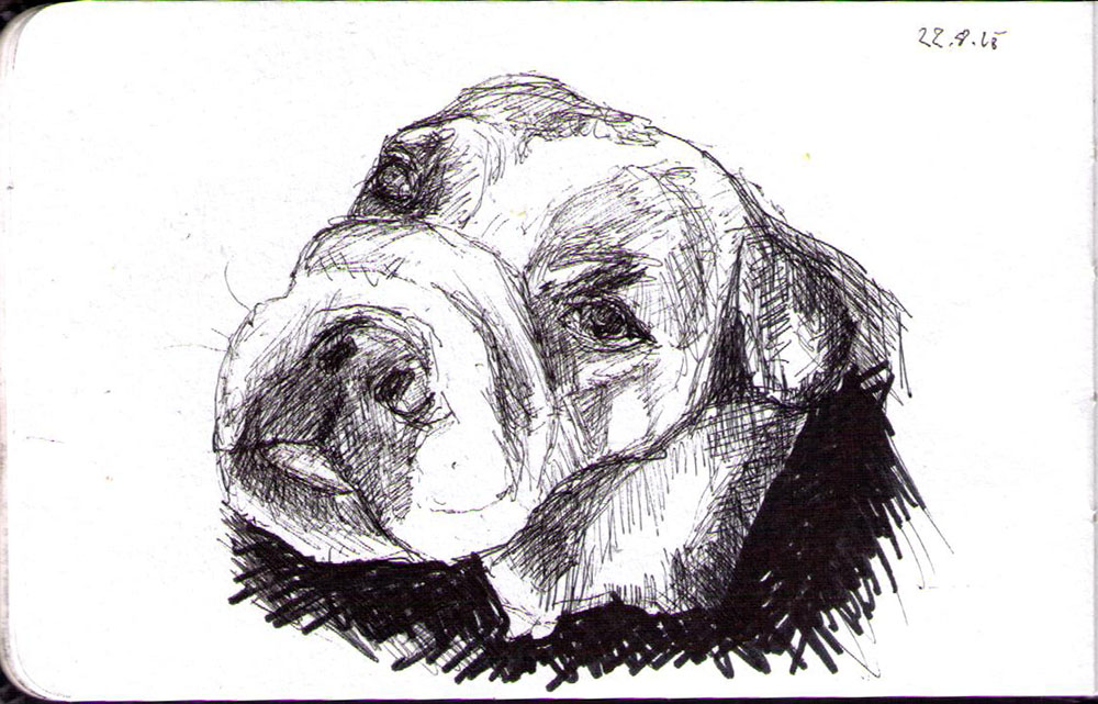 Drawing of a bulldog dog in ballpoint pen