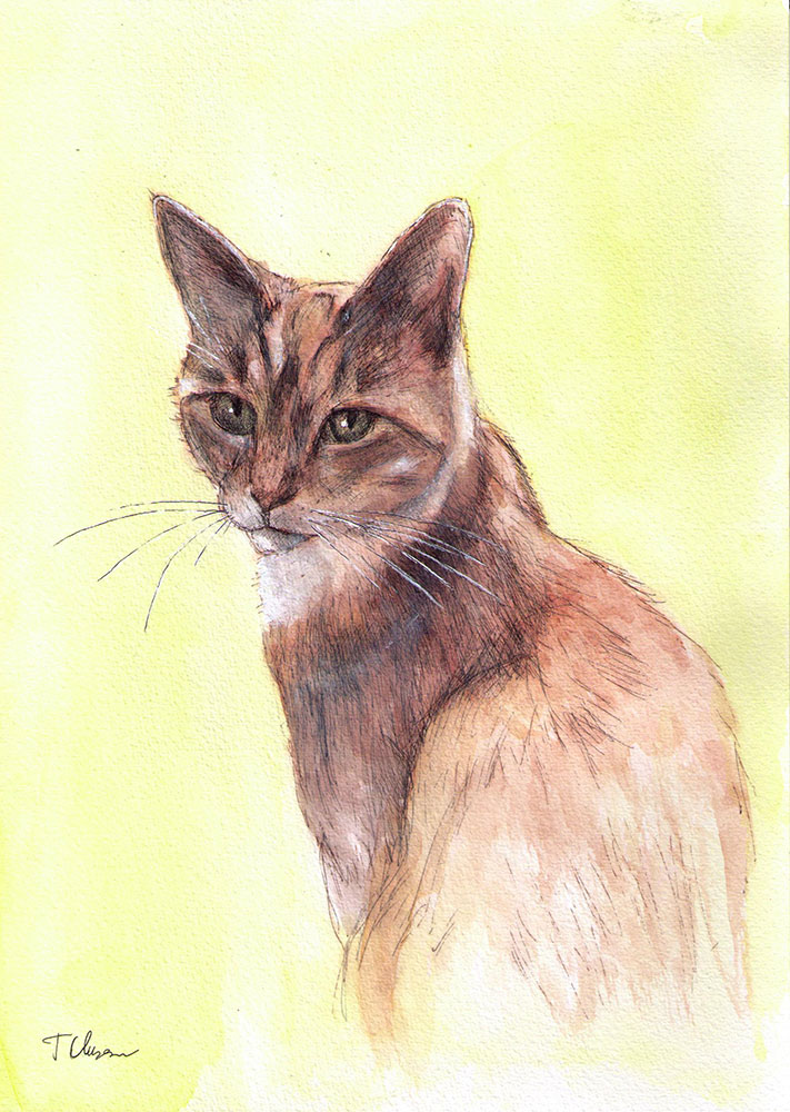 Commissioned drawing of a cat in ballpoint pen and watercolor