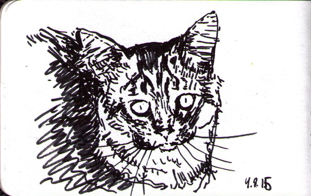 Drawing of a cat in ink marker