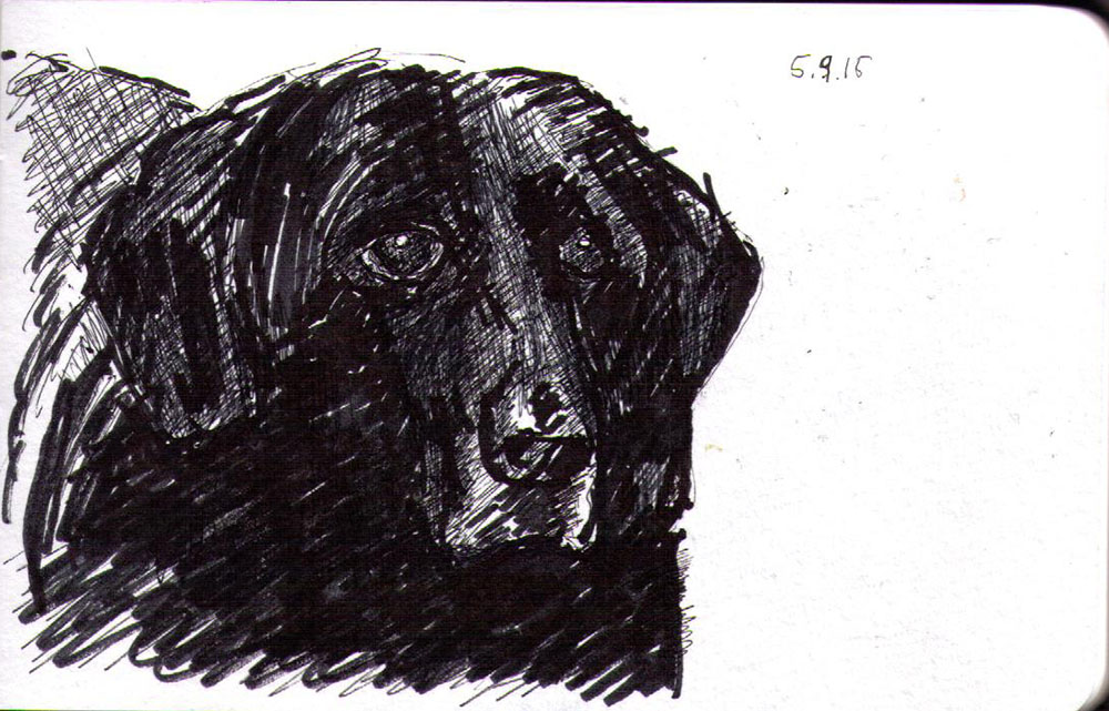 Drawing of a dog in ink marker and ballpoint pen