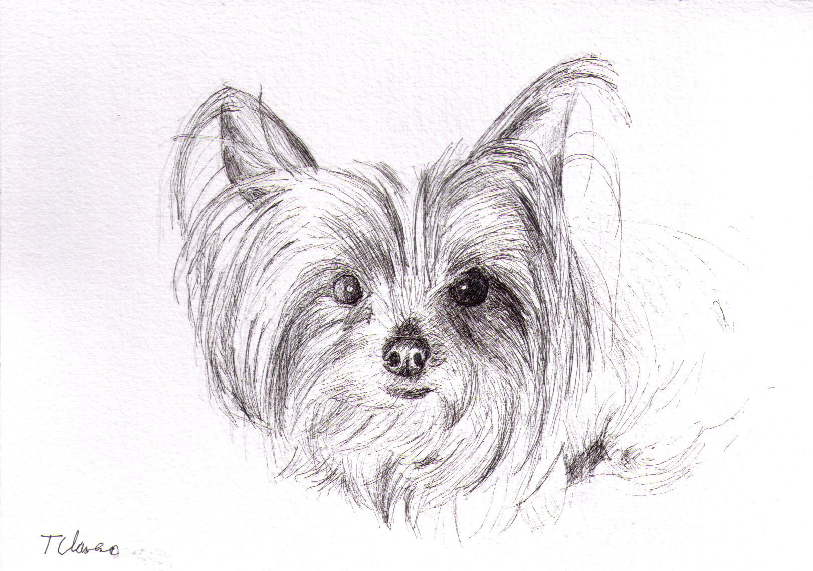 Commissioned drawing of a dog in ballpoint pen