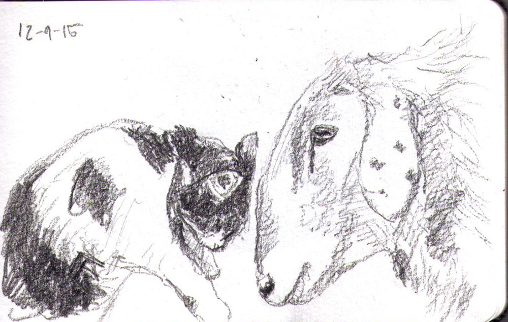 Drawing of a cat and a sheep in pencil