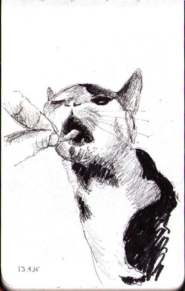 Drawing of a cat getting a treat in ballpoint pen