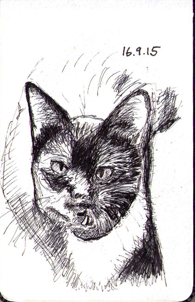 Drawing of a cat called George in ballpoint pen