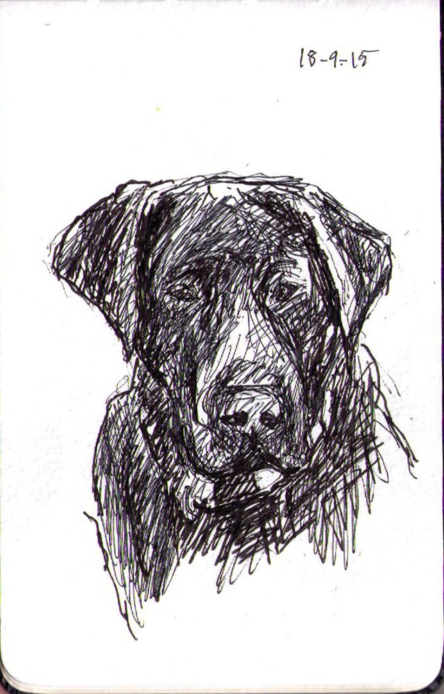 Sketch of a dog in ballpoint pen