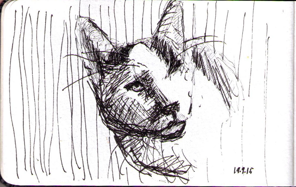 Sketch of a cat in ballpoint pen