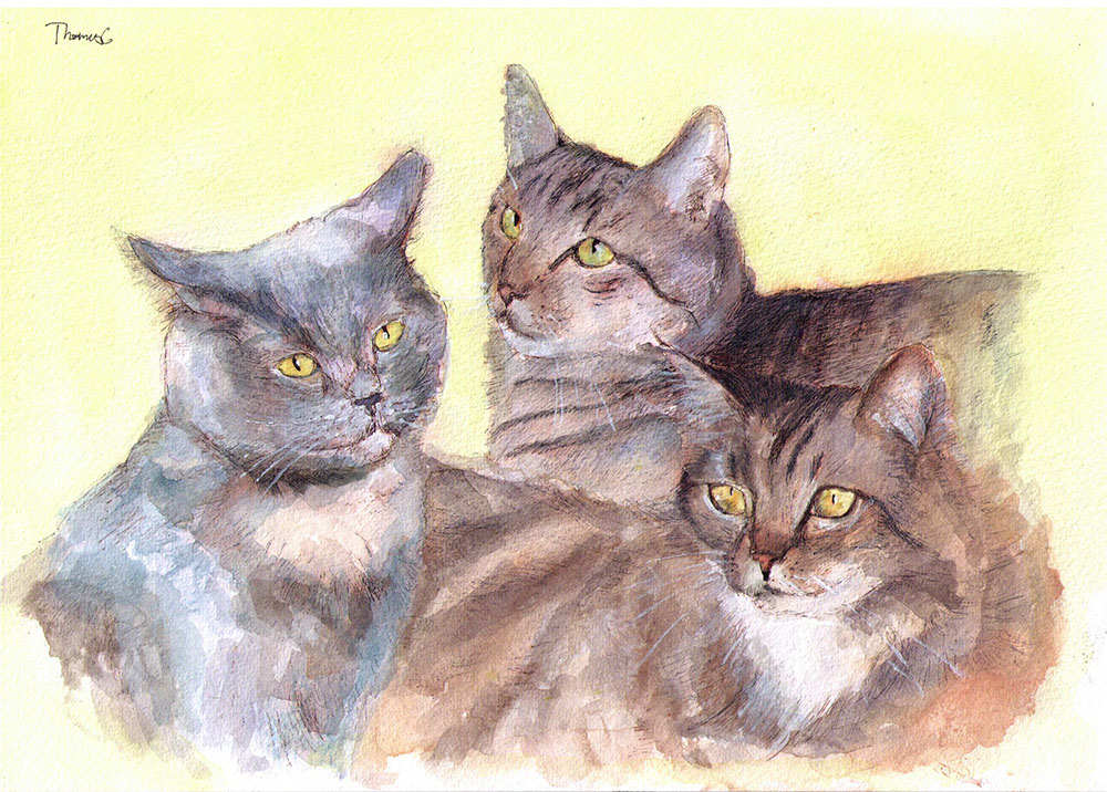 Commissioned watercolor and ballpoint pen triple portrait of three cats