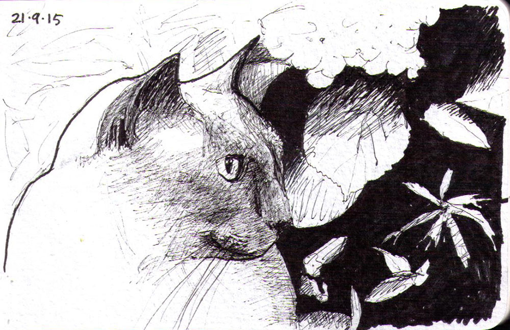 Drawing of a cat called Merlin in ballpoint pen