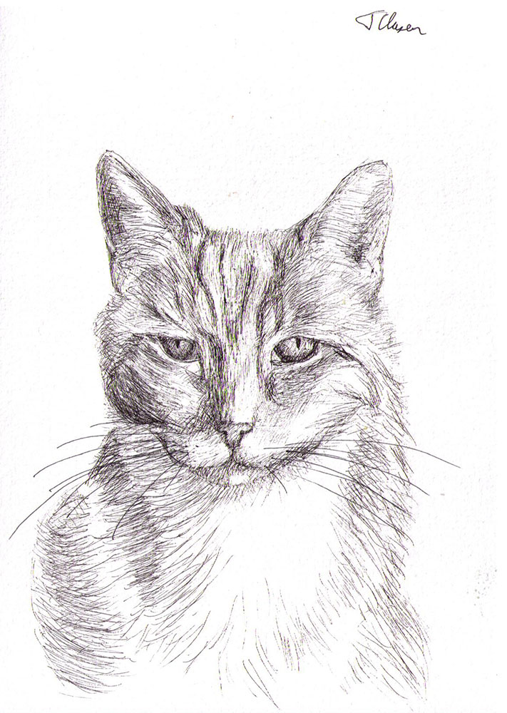 commissioned drawing of a cat in ballpoint pen